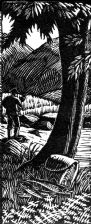 wood-engraving original print: Trout Stream 2, for the dust-jacket of Loved River